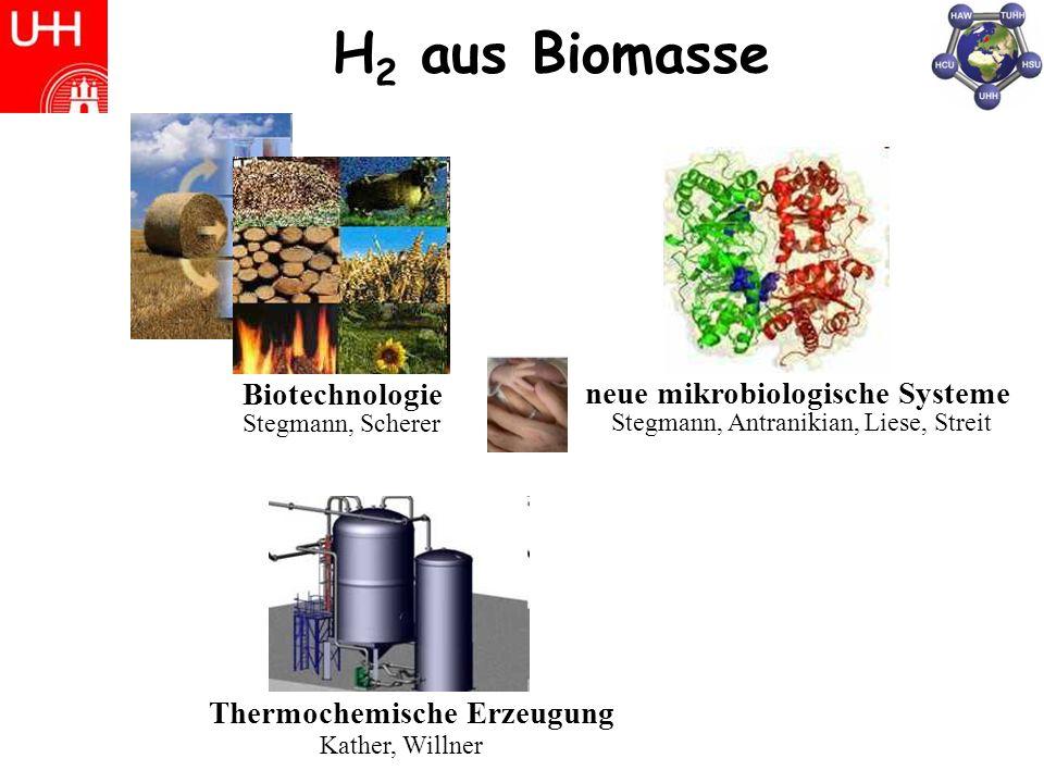 H2 aus Biomasse Biotechnologie neue mikrobiologische Systeme