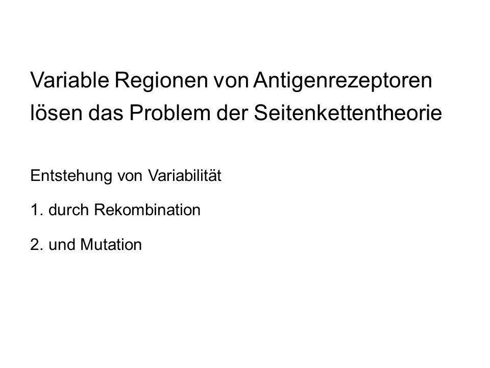 Variable Regionen von Antigenrezeptoren