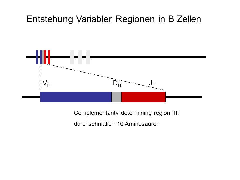 Entstehung Variabler Regionen in B Zellen