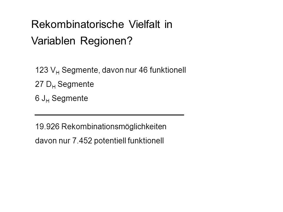 Rekombinatorische Vielfalt in Variablen Regionen