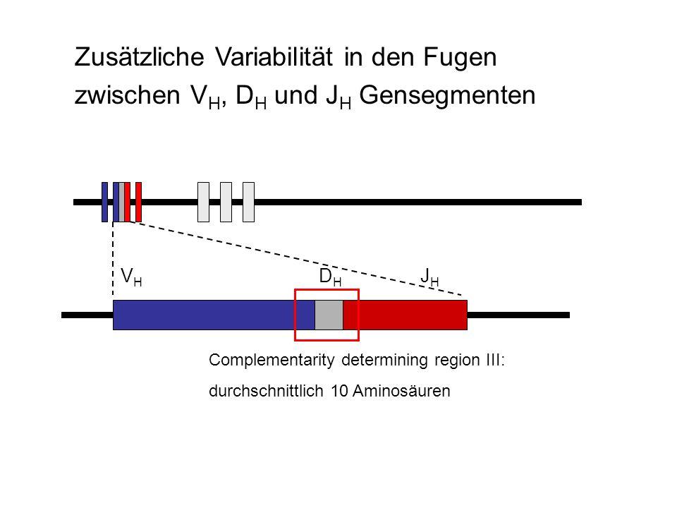 Zusätzliche Variabilität in den Fugen zwischen VH, DH und JH Gensegmenten