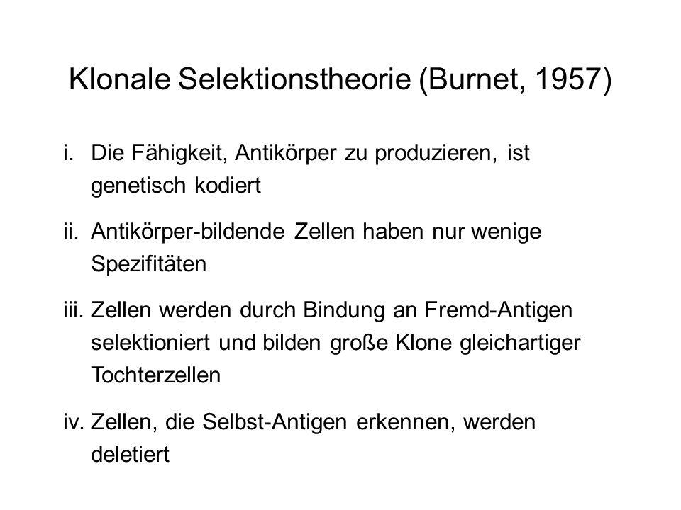 Klonale Selektionstheorie (Burnet, 1957)