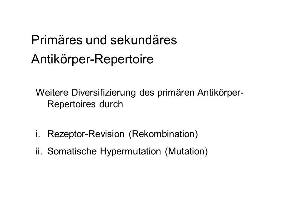 Primäres und sekundäres Antikörper-Repertoire