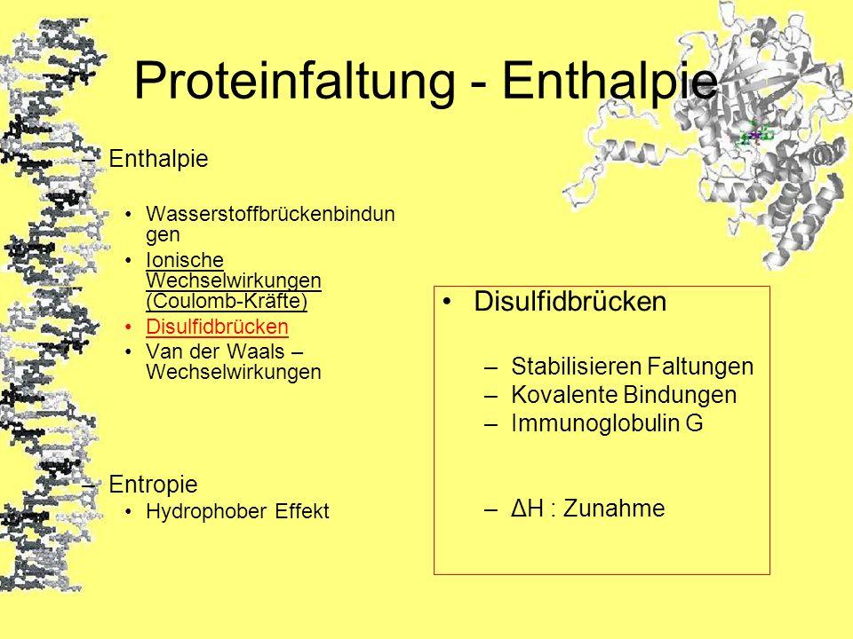 Proteinfaltung - Enthalpie
