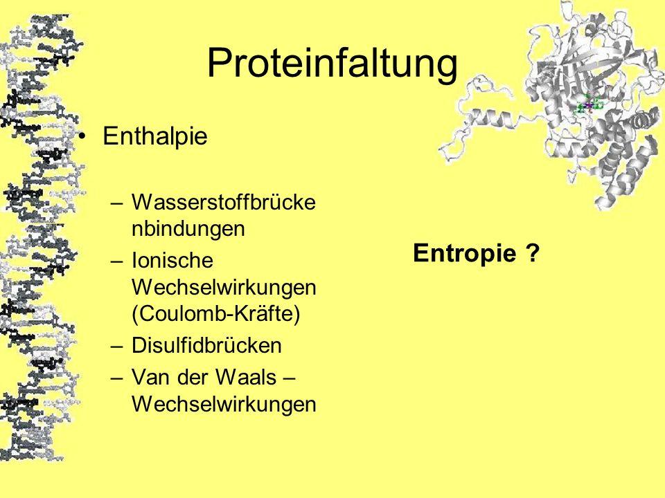 Proteinfaltung Enthalpie Entropie Wasserstoffbrückenbindungen