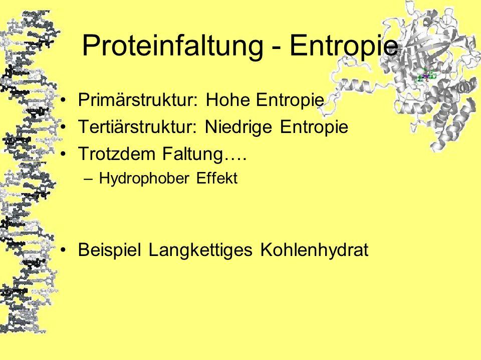 Proteinfaltung - Entropie