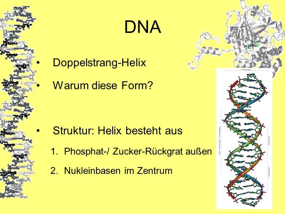 DNA Doppelstrang-Helix Warum diese Form Struktur: Helix besteht aus