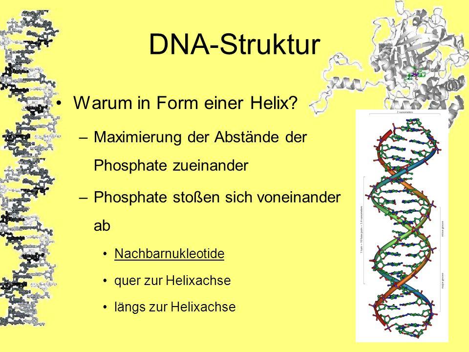 DNA-Struktur Warum in Form einer Helix