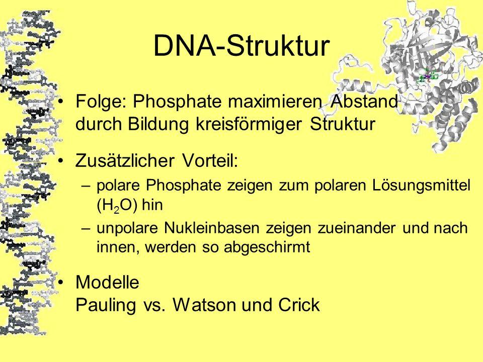 DNA-StrukturFolge: Phosphate maximieren Abstand durch Bildung kreisförmiger Struktur. Zusätzlicher Vorteil: