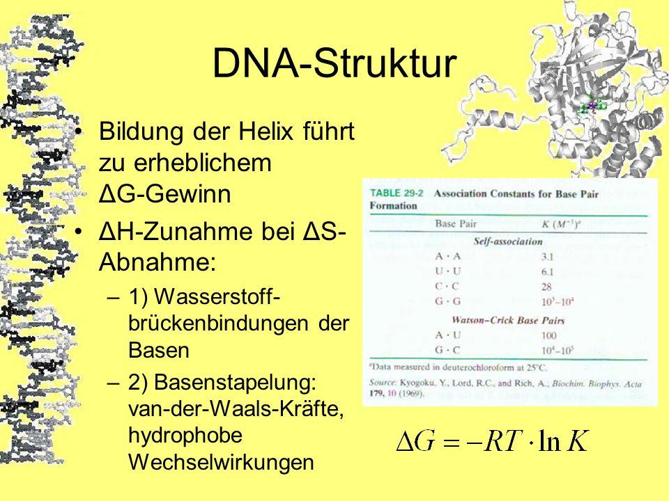 DNA-Struktur Bildung der Helix führt zu erheblichem ΔG-Gewinn