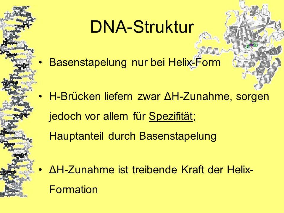 DNA-Struktur Basenstapelung nur bei Helix-Form