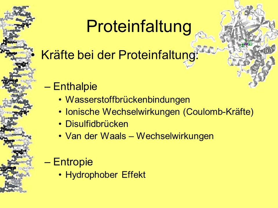 Proteinfaltung Kräfte bei der Proteinfaltung: Enthalpie Entropie