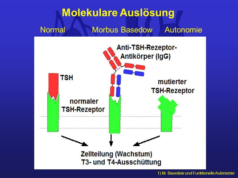 Molekulare Auslösung Normal Morbus Basedow Autonomie