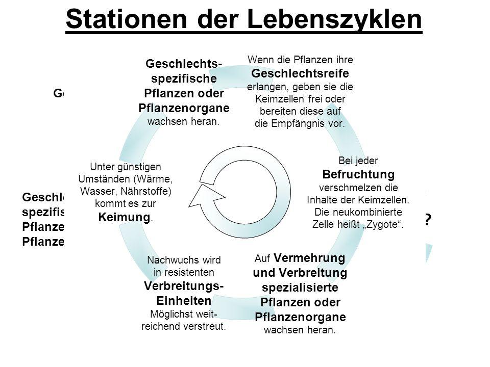 Stationen der Lebenszyklen