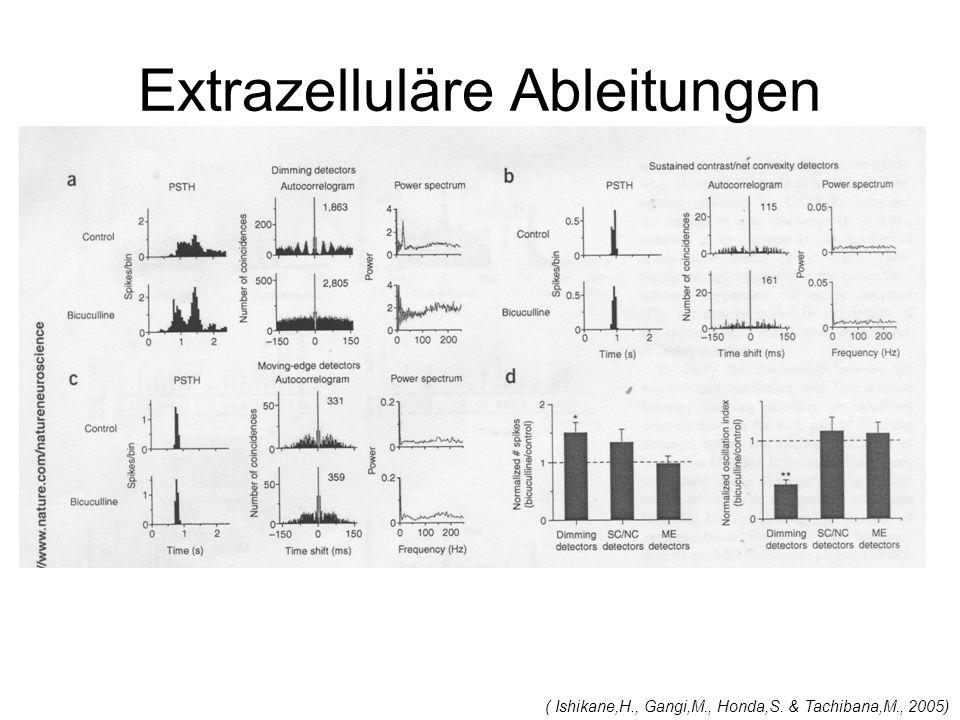 Extrazelluläre Ableitungen