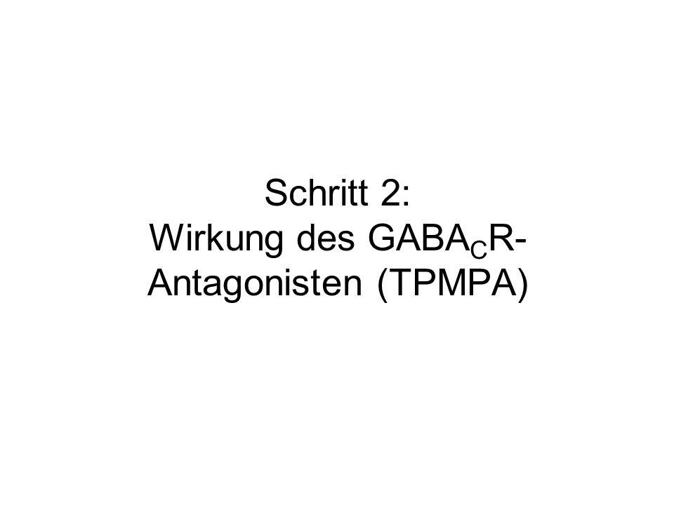 Schritt 2: Wirkung des GABACR-Antagonisten (TPMPA)
