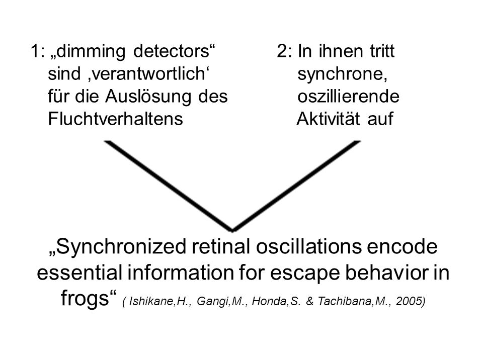 """Synchronized retinal oscillations encode"