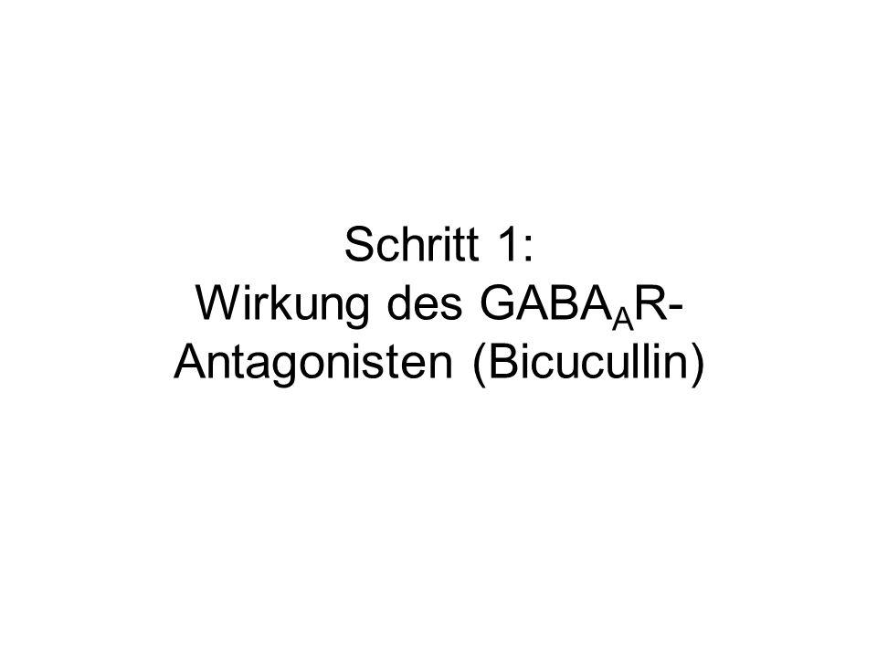 Schritt 1: Wirkung des GABAAR-Antagonisten (Bicucullin)