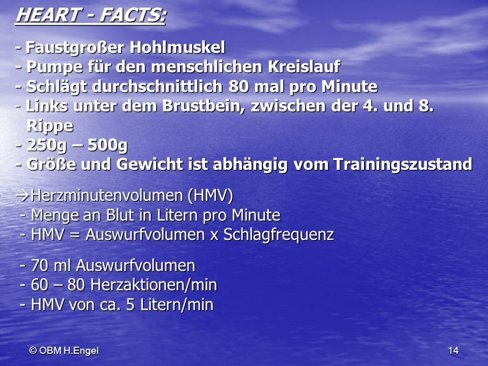 HEART - FACTS: - Faustgroßer Hohlmuskel