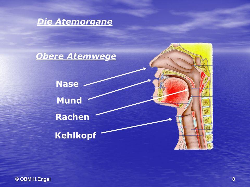 Die Atemorgane Obere Atemwege Nase Mund Rachen Kehlkopf © OBM H.Engel