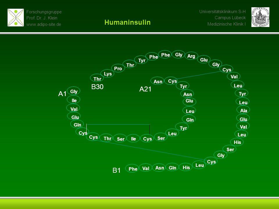 Humaninsulin B30 A21 A1 B1 Phe Gly Phe Arg Tyr Glu Thr Gly Pro Cys Lys