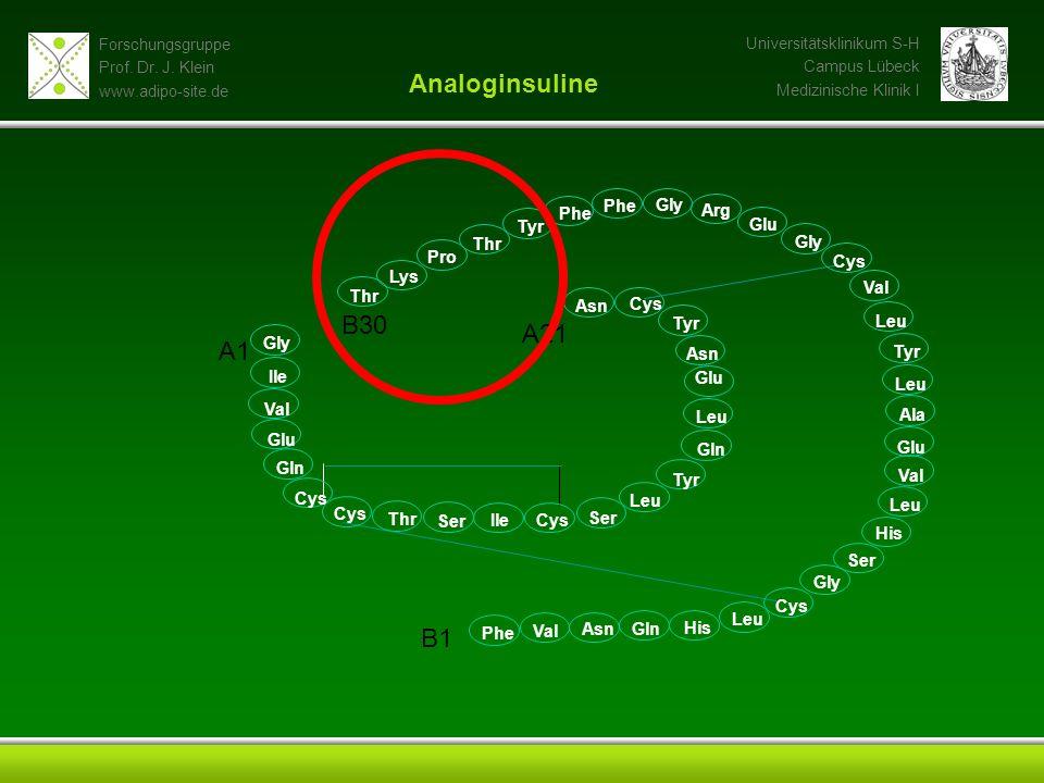 Analoginsuline B30 A21 A1 B1 Phe Gly Phe Arg Tyr Glu Thr Gly Pro Cys