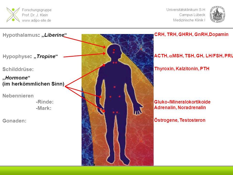 "Hypothalamus: ""Liberine"