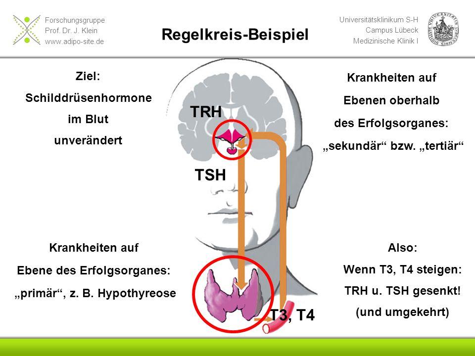Regelkreis-Beispiel TRH TSH T3, T4 Ziel: Schilddrüsenhormone im Blut
