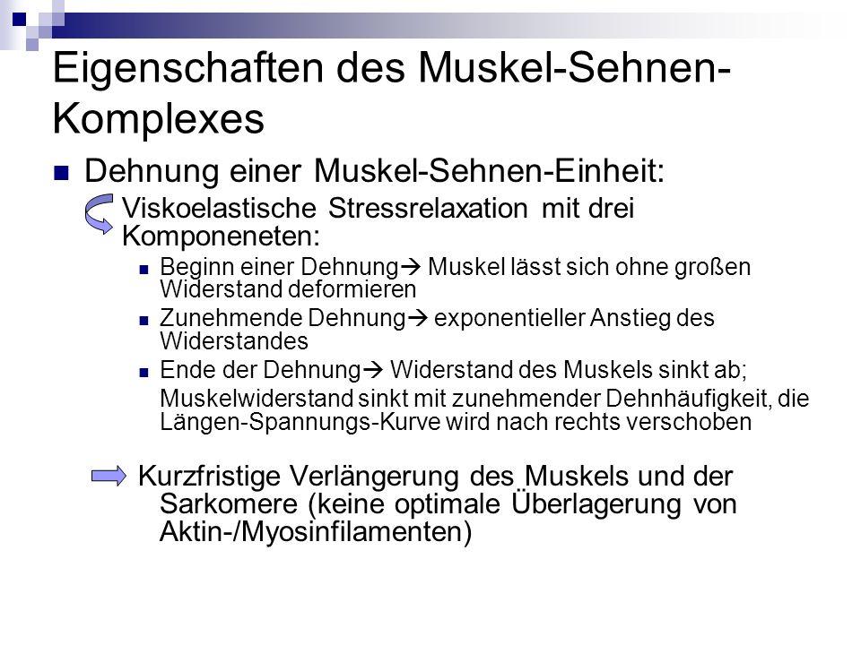 Eigenschaften des Muskel-Sehnen-Komplexes