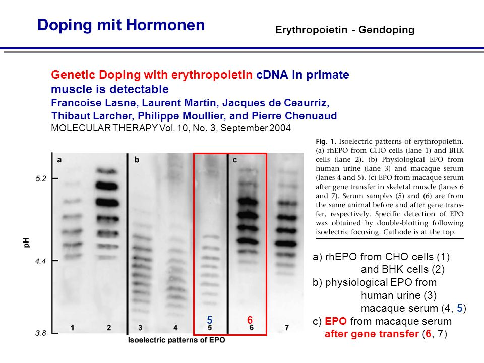 Doping mit Hormonen Genetic Doping with erythropoietin cDNA in primate