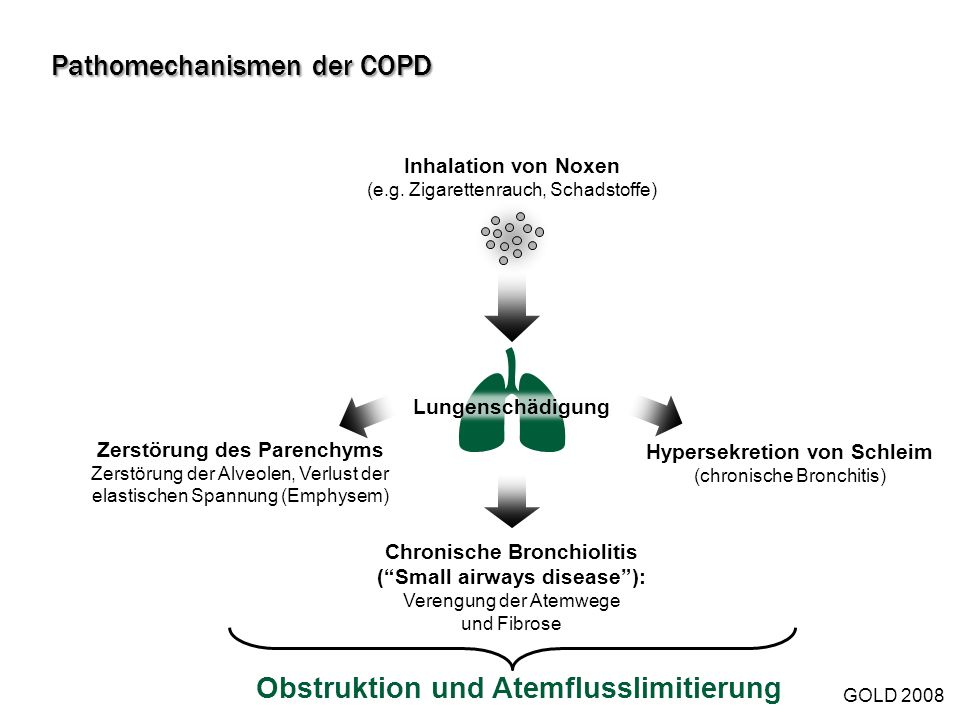 Pathomechanismen der COPD
