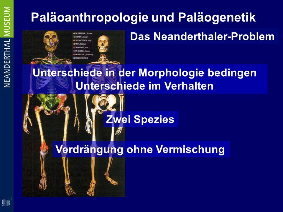 Paläoanthropologie und Paläogenetik