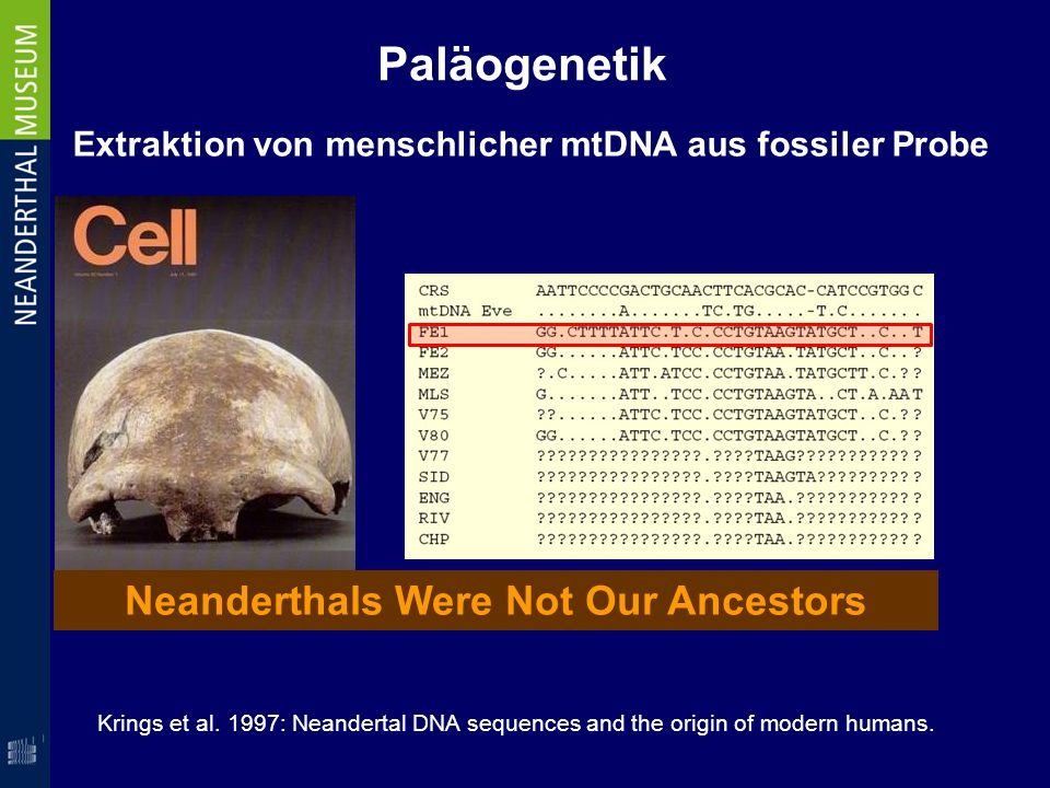 Neanderthals Were Not Our Ancestors