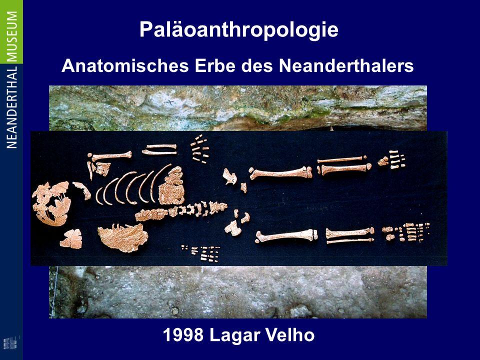 Paläoanthropologie Anatomisches Erbe des Neanderthalers
