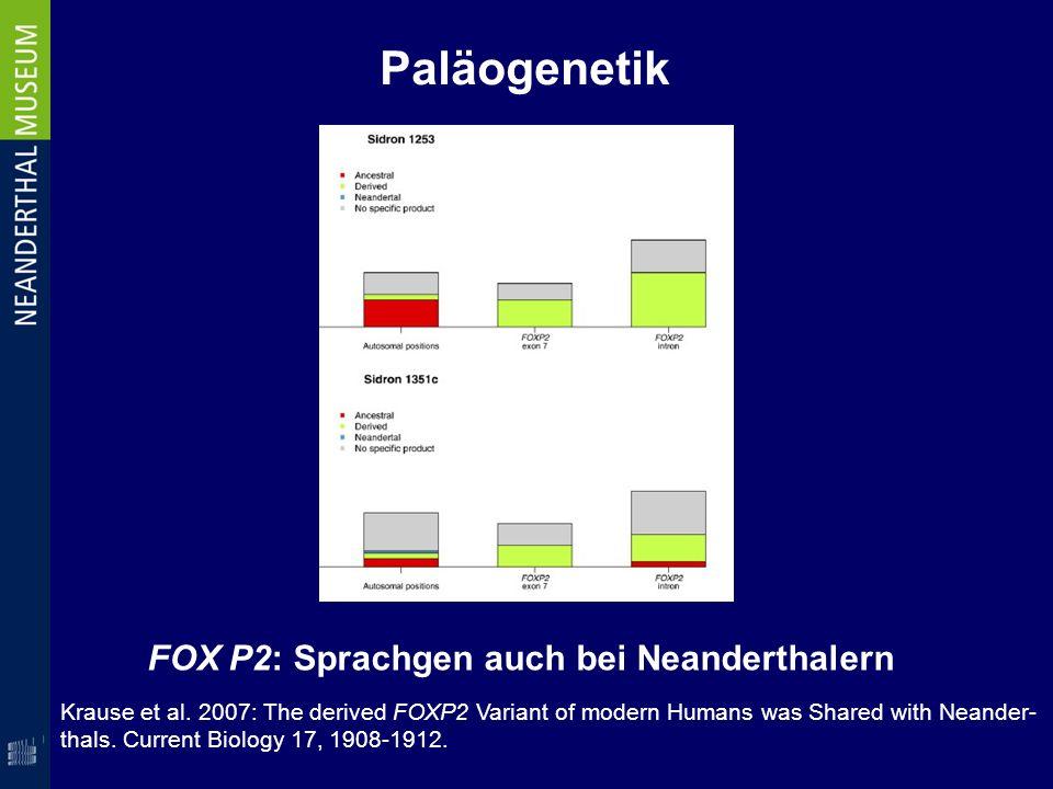 Paläogenetik FOX P2: Sprachgen auch bei Neanderthalern