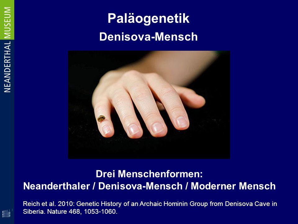 Neanderthaler / Denisova-Mensch / Moderner Mensch