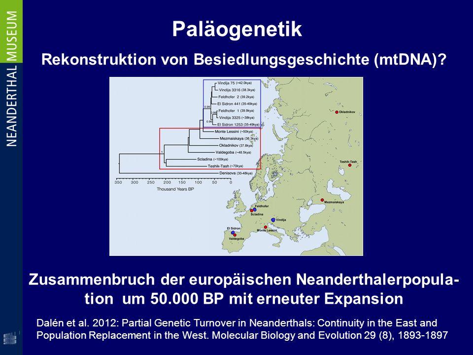 Rekonstruktion von Besiedlungsgeschichte (mtDNA)