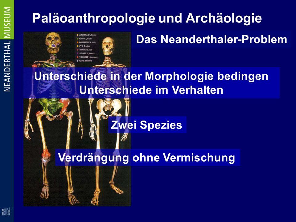 Paläoanthropologie und Archäologie