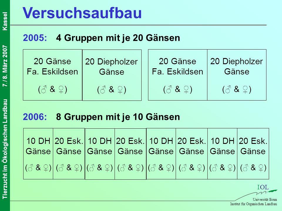 Versuchsaufbau 2005: 4 Gruppen mit je 20 Gänsen