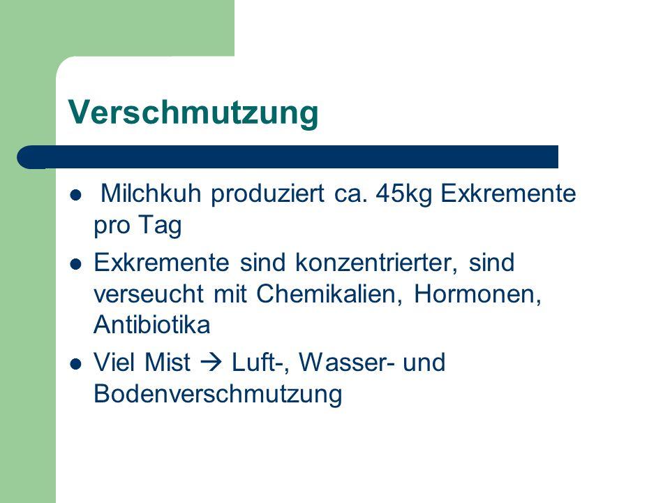 Verschmutzung Milchkuh produziert ca. 45kg Exkremente pro Tag