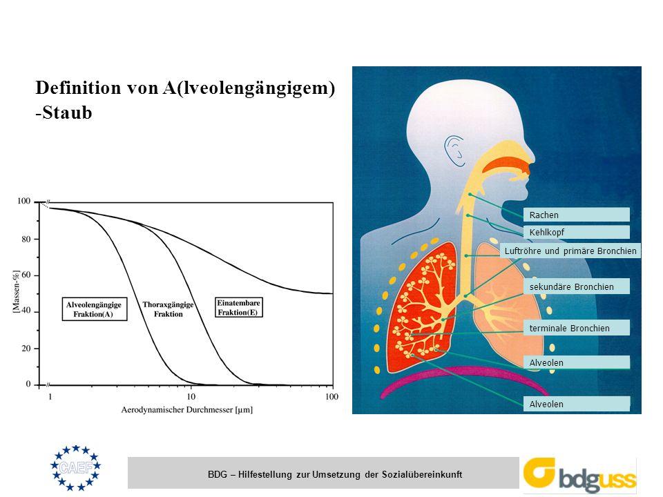 Luftröhre und primäre Bronchien