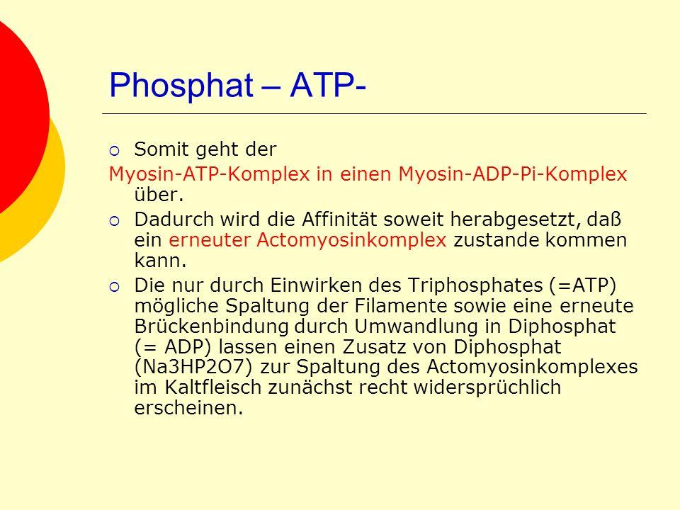 Phosphat – ATP- Somit geht der