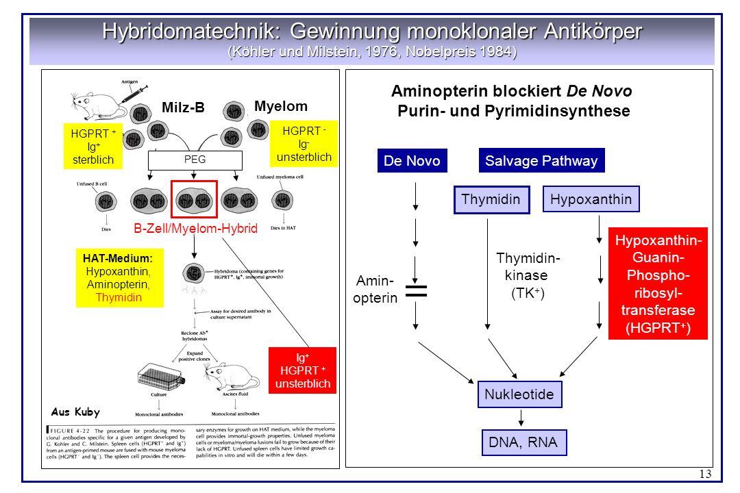 Aminopterin blockiert De Novo Purin- und Pyrimidinsynthese