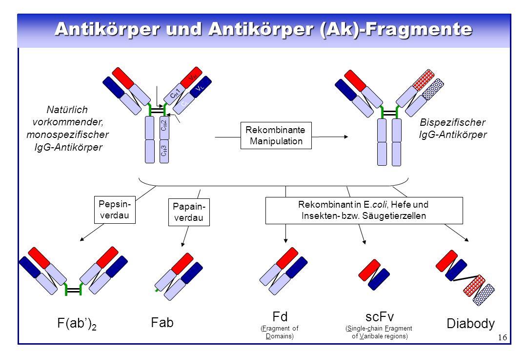 Antikörper und Antikörper (Ak)-Fragmente