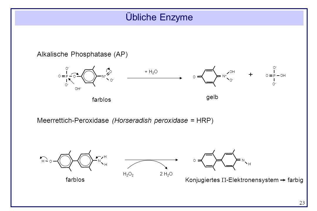 Übliche Enzyme + Alkalische Phosphatase (AP)
