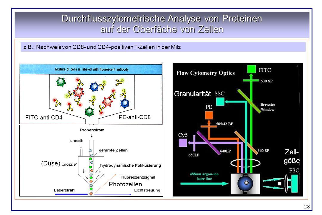 Durchflusszytometrische Analyse von Proteinen