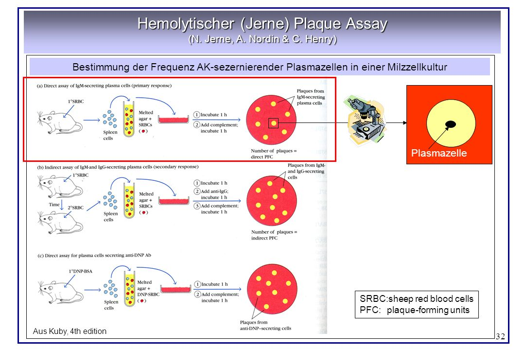 Hemolytischer (Jerne) Plaque Assay