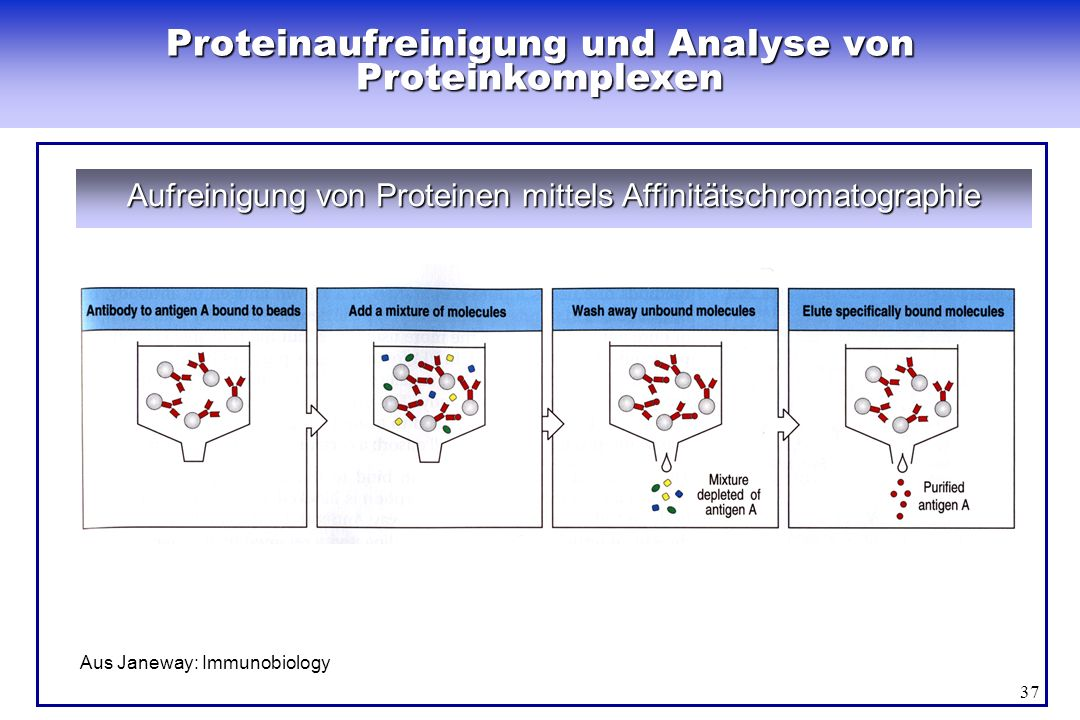 Proteinaufreinigung und Analyse von Proteinkomplexen