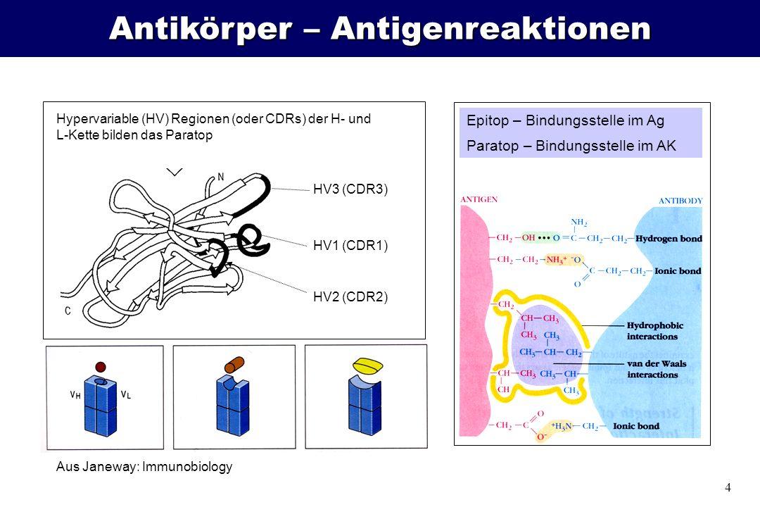 Antikörper – Antigenreaktionen