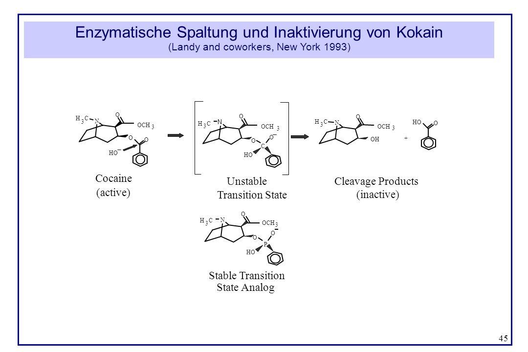 Enzymatische Spaltung und Inaktivierung von Kokain